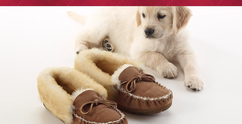 Puppy and L.L.Bean Wicked Good Slippers.