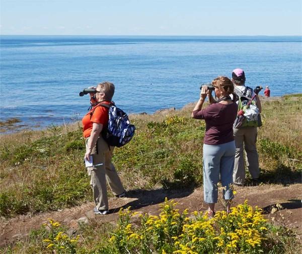 People birding on Monhegan Island