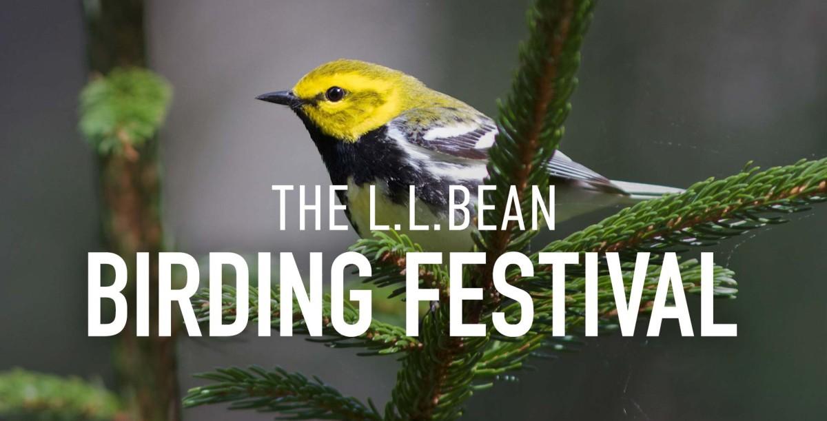 The L.L.Bean Birding Festival
