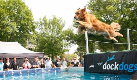 Dog leaping off dock