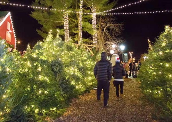 Follow the path through our enchanting forest with over 600 trees covered in twinkling lights.