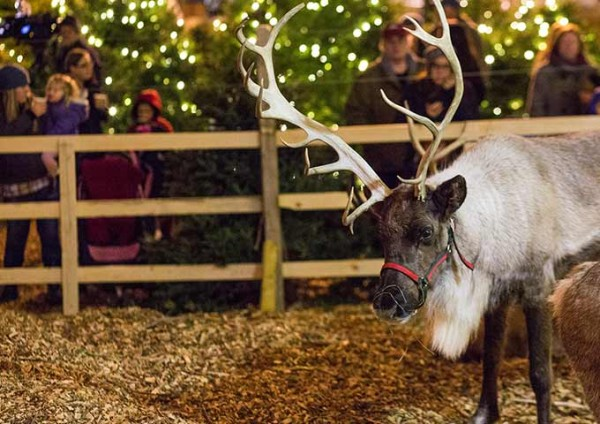 Santa's reindeer will be with us every weekend. Stop by and take a peek.