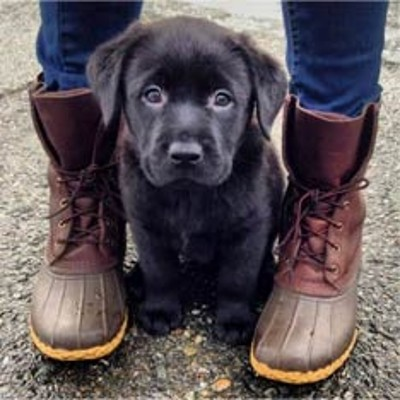 L.L.Bean Boots with puppy