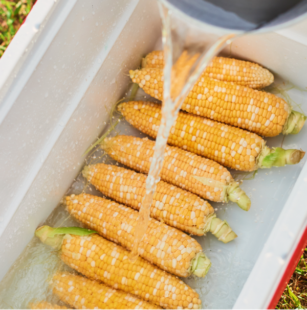 Cook corn in your cooler