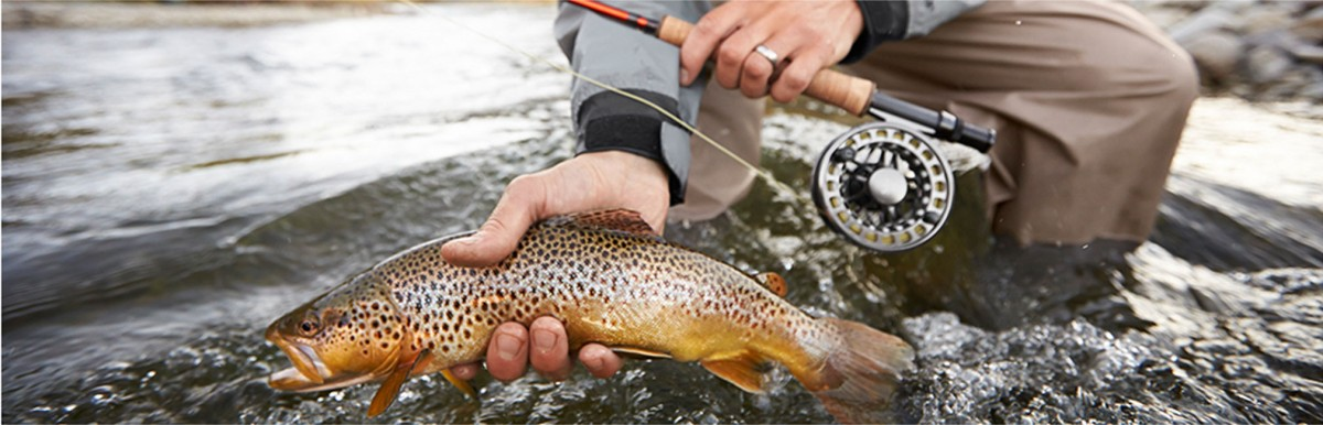 A beautiful shot of an L.L.Bean fly rod and a fish.