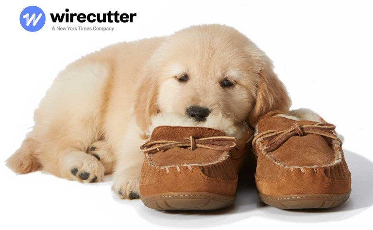 Cute puppy laying on slippers