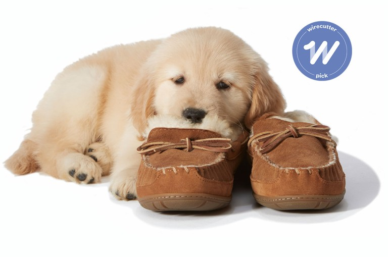 Puppy laying on slippers