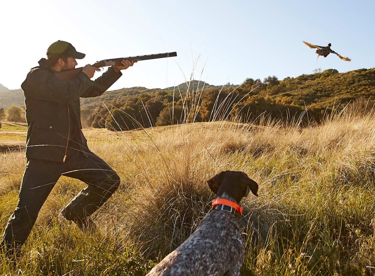 Upland hunter with dog and pheasant in flight.