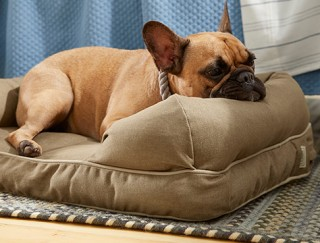 Close-up of dog on an L. L. Bean dog bed.
