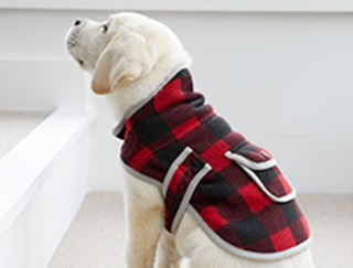 Cute yellow lab puppy in a black and red checkered dog jacket.