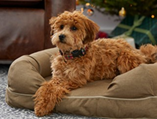 Dog on a dog bed by a Christmas tree.