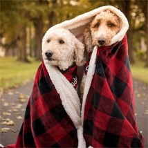 two dogs wrapped in Bean blanket
