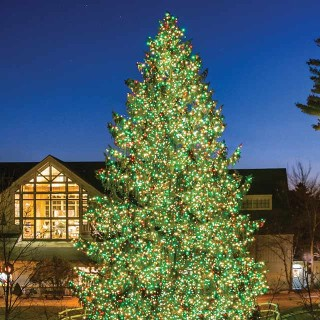 Beautiful lit holiday tree outside a the L. L. Bean Flagship campus in Freeport.