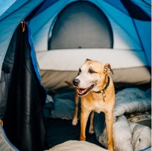 dog in a tent