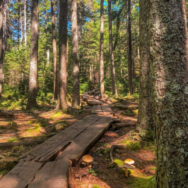 A log path in a sunlight-dappled forest.