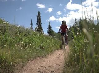 Person riding a bike on a dirt path through tall grass.