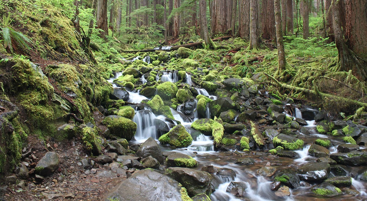 Enchanted Valley, Olympic National Park, WA