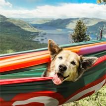Dog in a hammock, in a beautiful outdoor scene.