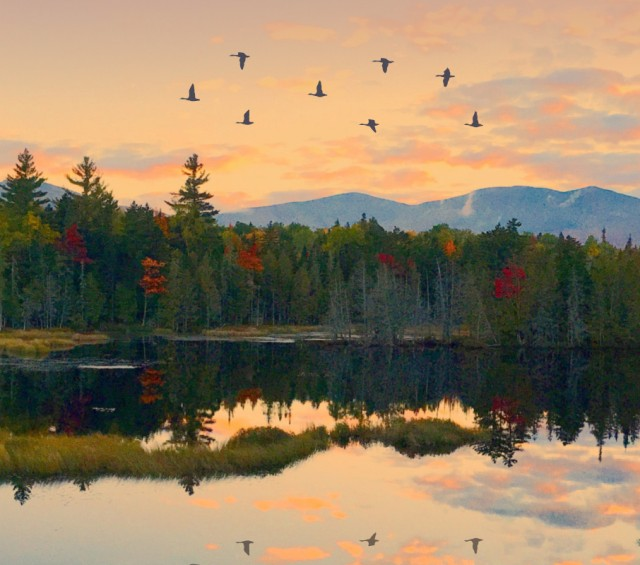 Lake and mountain at sunset with geese flying above the treeline.