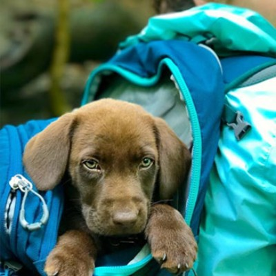 Puppy in a backpack.
