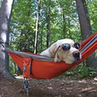 Dog with sunglasses in a hammock.
