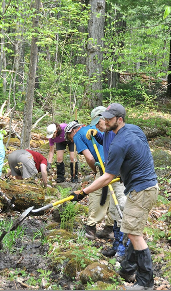A crew cleaning and maintaining a wooded area.