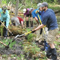 A group of people working along a forest trail.