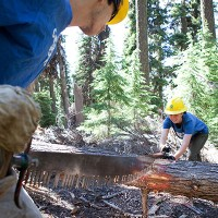 Students chopping up a fallen tree.