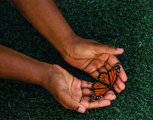 Hands holding a monarch butterfly.