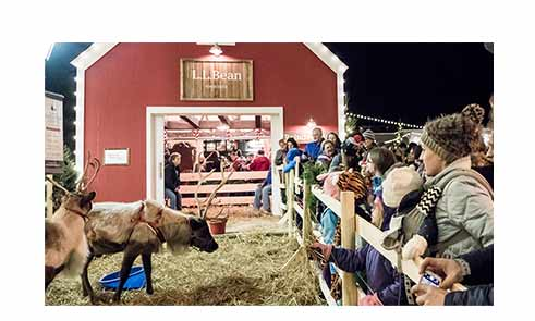 A group of people watching reindeer during Northern Lights holiday celebration.