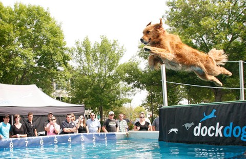 Free Event. Dog Days of August featuring DockDogs® at L.L.Bean.