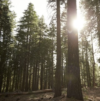 Intention & Attention: A Guide to Forest Bathing